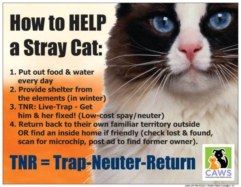 Stray Cat Rescuing Tips
